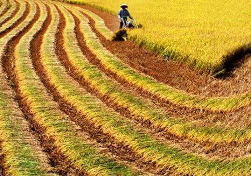 Công ty Cổ phần phân lân nung chảy Văn Điển - Đa dạng hóa sản phẩm