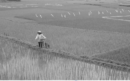 13 nguyên tố dinh dưỡng cần cho lúa
